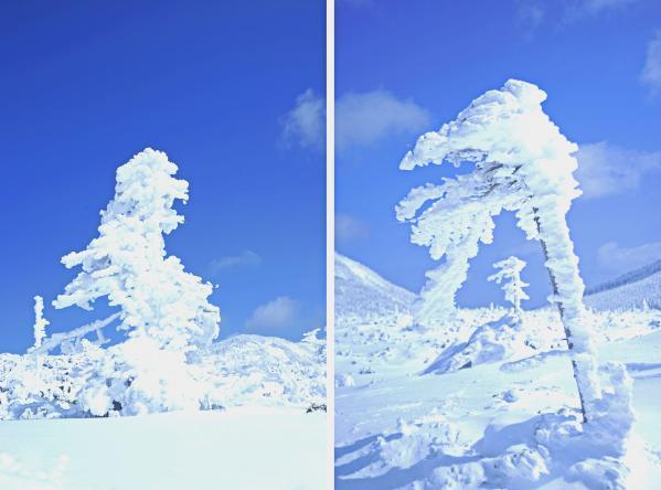八ヶ岳樹氷